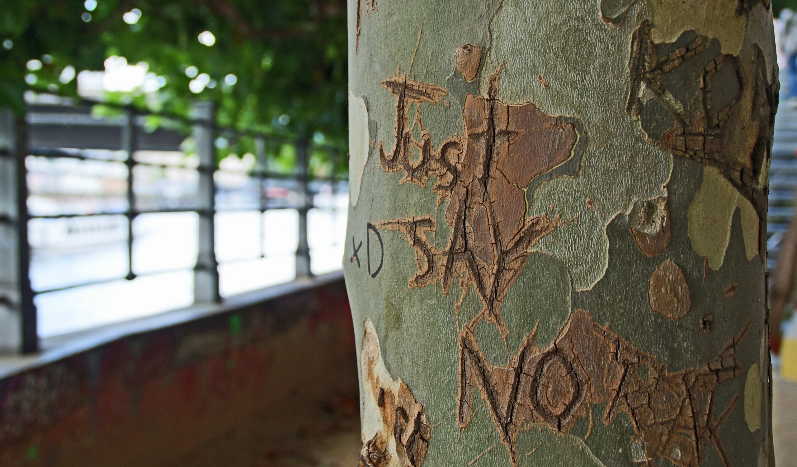 Are you a people please? Just Say No written on tree trunk
